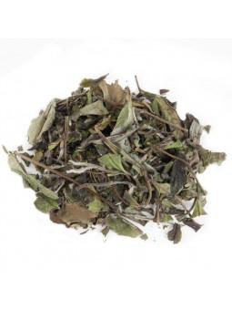O té branco Pai Mu Tan