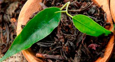variedades de té negro