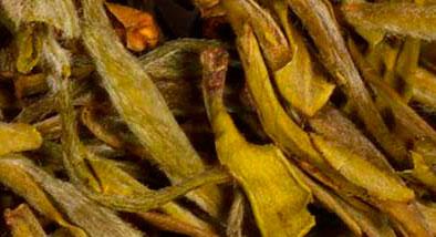 tipos de té amarillo