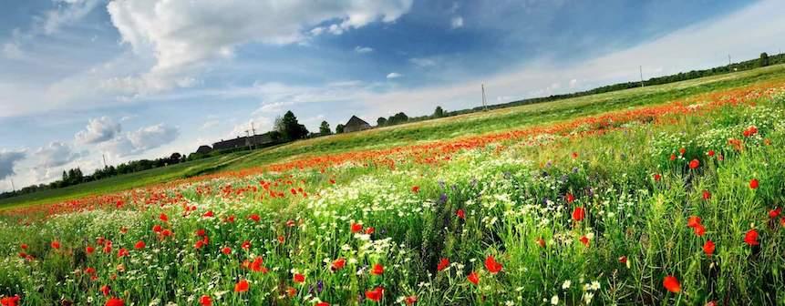 Astenia primaveral: dile adiós con plantas medicinales y otros consejos naturales