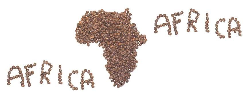 Café de África: características y variedades