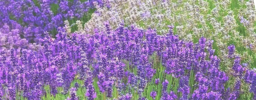 Cremas y pomadas caseras con plantas medicinales para cuidar la piel