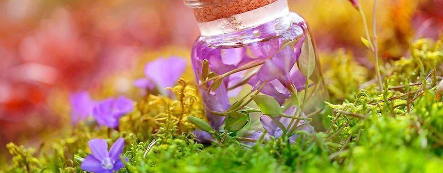 Las mejores plantas medicinales para cuidar la salud digestiva